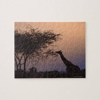 Girafe réticulée 2 puzzle