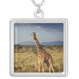 Girafe réticulée, camelopardalis 2 de girafe pendentif carré