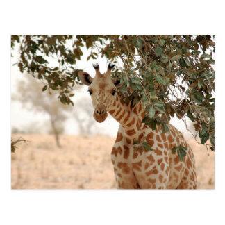 Girafe Snoopy Carte Postale