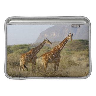Girafe somalienne, girafe réticulée, Giraffa Poches Macbook Air