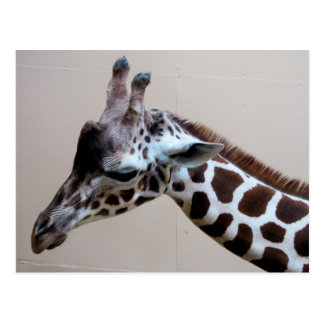 Girafe triste carte postale
