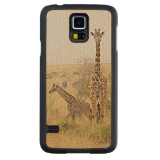Girafes de Maasai errant à travers le Maasai Mara Coque Galaxy S5 En Érable