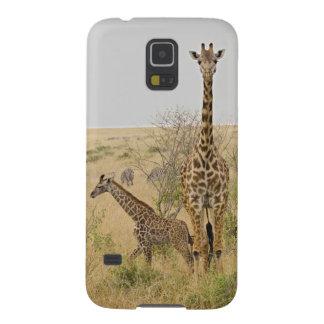Girafes de Maasai errant à travers le Maasai Mara Coque Pour Samsung Galaxy S5