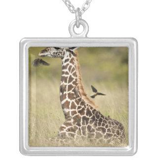 Girafes de masai, camelopardalis de Giraffa Collier