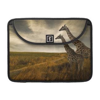 Girafes et le paysage poche pour macbook