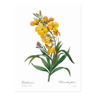 Giroflée jaune cartes postales
