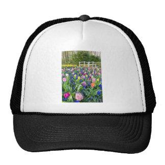 Gisement de fleurs avec les jacinthes et le pont casquettes