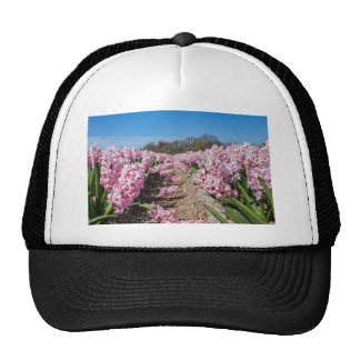 Gisement de fleurs avec les jacinthes roses en casquettes