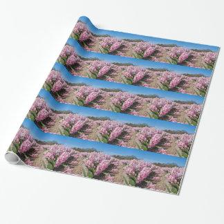 Gisement de fleurs avec les jacinthes roses en papier cadeau