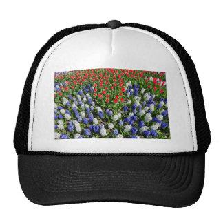Gisement de fleurs avec les tulipes bleues et les casquettes