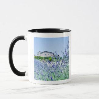 Gisement de lavande avec un bâtiment dans mug