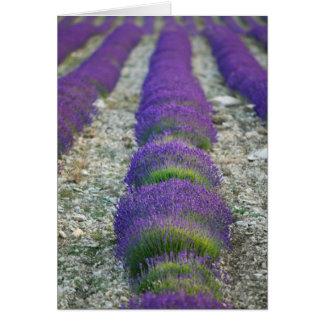 Gisement de lavande, Provence, France Carte De Vœux