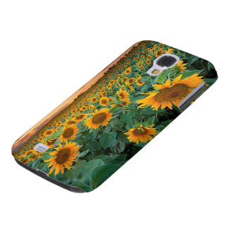Gisement de tournesol dans Longmont, le Colorado Coque Galaxy S4