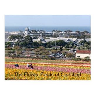 Gisements de fleur de carte postale de Carlsbad