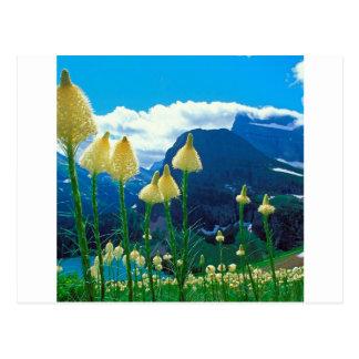 Glacier Montana de lac Beargrass Grinnell de parc Carte Postale