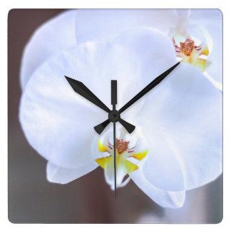 gloire de matin horloge carrée
