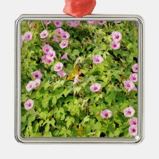 Gloires de matin roses Bush Ornement Carré Argenté