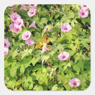 Gloires de matin roses Bush Sticker Carré