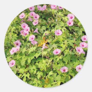 Gloires de matin roses Bush Sticker Rond