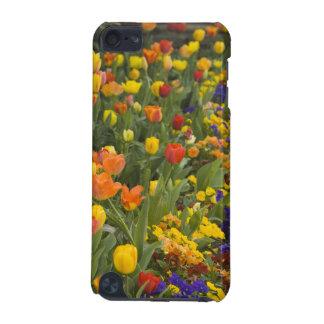 Glycines et tulipes dans le jardin de Dumbarton Coque iPod Touch 5G