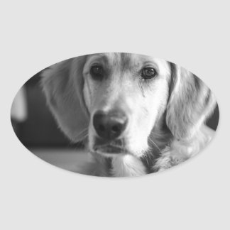 Golden retriever sticker ovale