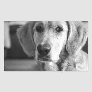 Golden retriever sticker rectangulaire