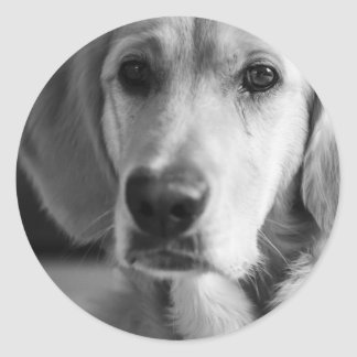 Golden retriever sticker rond