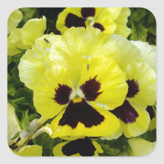 Golden_Yellow_Pansies, _ Sticker Carré