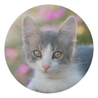 Gomme Amoureux de les chats pelucheux de photo de petit