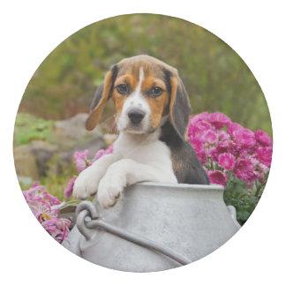 Gomme Chiot tricolore mignon de chien de beagle dans un