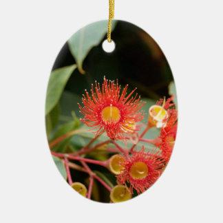 Gomme fleurissante rouge (ficifolia de Corymbia) Ornement Ovale En Céramique