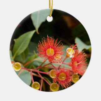 Gomme fleurissante rouge (ficifolia de Corymbia) Ornement Rond En Céramique