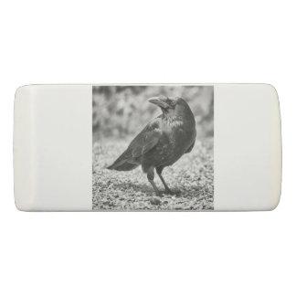Gomme Oiseau noir, corneille, sur les roches
