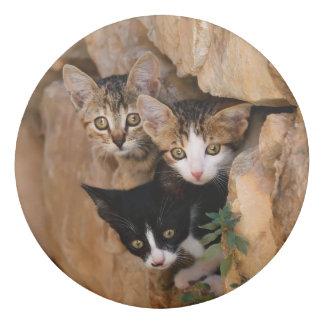 Gomme Photo drôle de trois de chat visages curieux