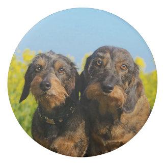 Gomme Photo mignonne de Dackel Doxie de deux chiens de