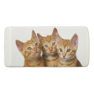 Gomme Photo principale de trois de gingembre de chat