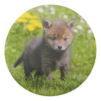 Gomme Photo sauvage d'animal de bébé de CUB de kit