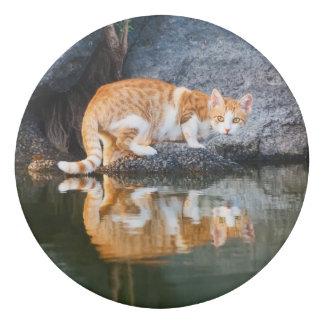 Gomme Réflexion de chat en photo drôle de chaton de