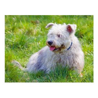 Gorge de carte postale de chien d'Imaal Terrier