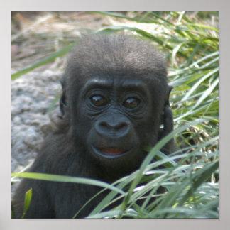 gorilla-baby10x10 poster