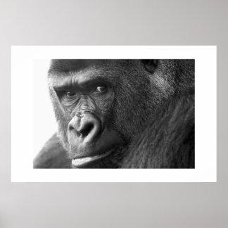 Gorille #1 affiches