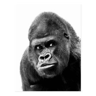 Gorille blanc noir cartes postales
