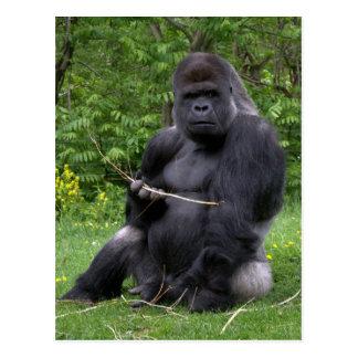 Gorille Carte Postale