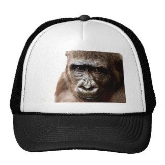 gorille casquettes