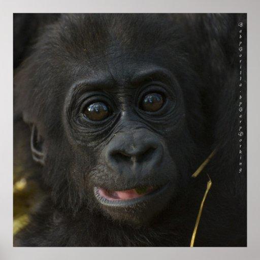 Gorille de bébé, par Gary Dorking Affiches