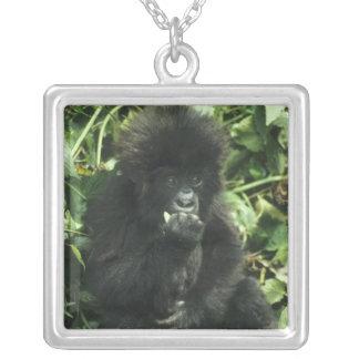 Gorille de montagne, (beringei de gorille de collier