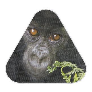 Gorille de montagne juvénile