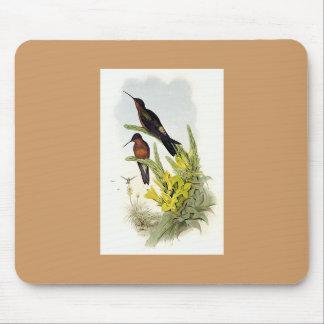 Gould - colibri géant tapis de souris