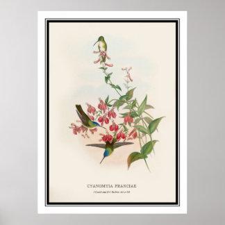 Gould et Richter, colibri vintage Posters