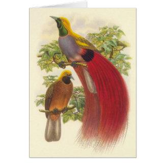 Gould - oiseau du paradis Gris-Chested Carte De Vœux